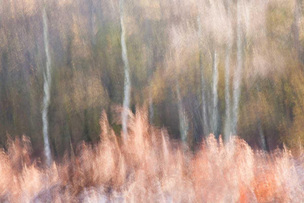 Early Frost - Ashdown Forest
