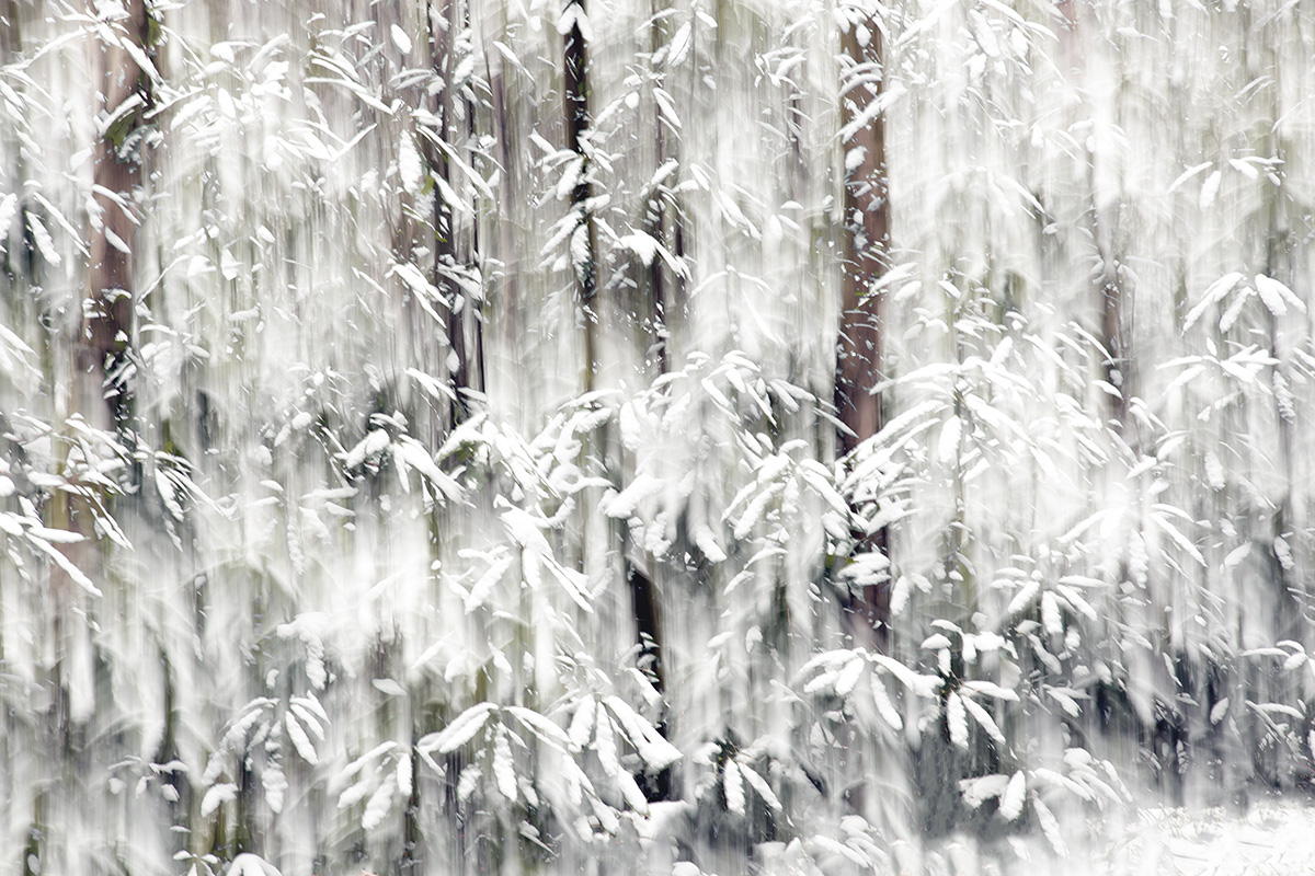 When the Snow Settled - Duncton