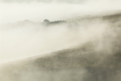 Sea Fret - Steyning-Bowl