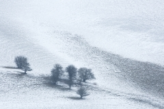 Shades of Winter - Ditchling