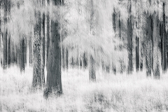 Patching Woods - Summer (IR)