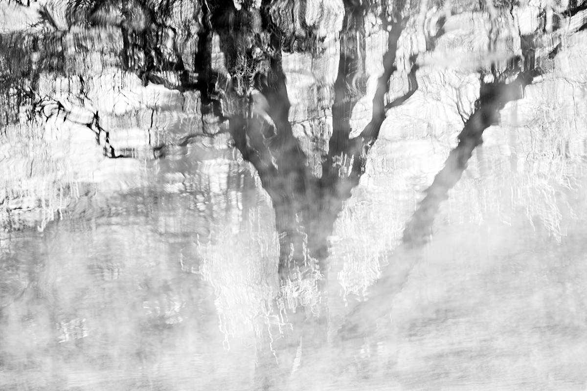 Winter Willow - Abstract