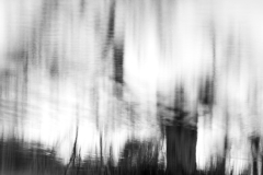 From the Lake - Abstract