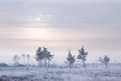 Winter Sun - Thursley