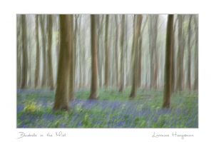 Bluebells in the MIst.jpg