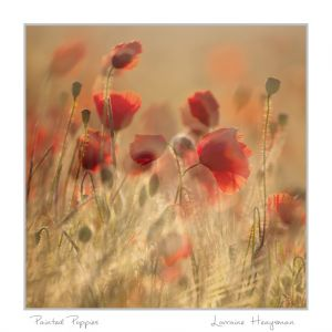 Painted Poppies web.jpg